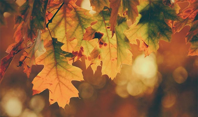 Gratitude Is Understanding, Fall Foliage